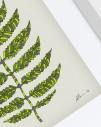Green-Fern-v2