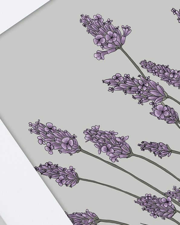 Lavender-V2